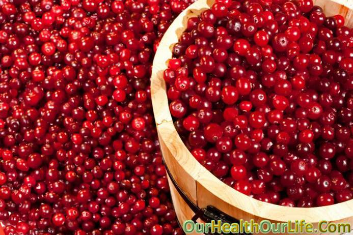 Red cranberry in pregnancy